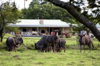 Santa Paloma Guest Farm, Hostely - East London
