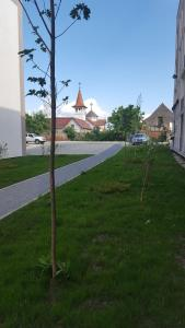 Boson Rent Apartament Sibiu, Appartamenti  Sibiu - big - 12