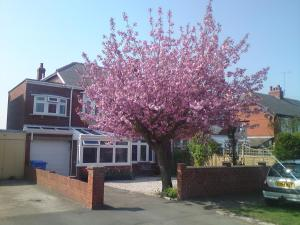 Cherry Blossom Guest House in Whitby, North Yorkshire, England