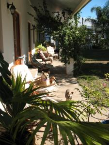 Elephant River Guest House, Penziony  Clanwilliam - big - 2