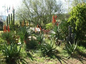 Elephant River Guest House, Penziony  Clanwilliam - big - 14