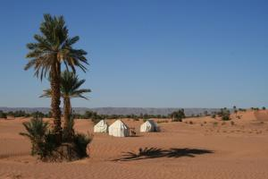Sahara Safari Camp