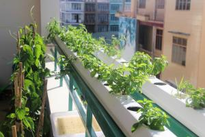 Winter Spring Homestay, Apartmány  Can Tho - big - 63