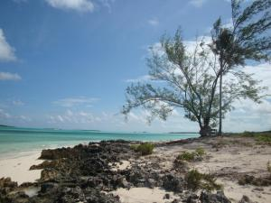 Exuma Driftwood Apartments