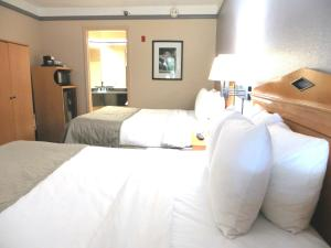 Queen Suite with Two Queen Beds and Sofa Bed - Pool View