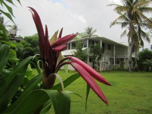 Photo of Morgana Guest House