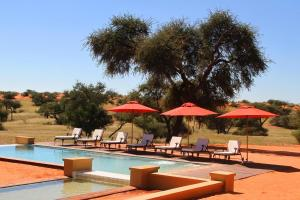 Photo of Zebra Kalahari Lodge