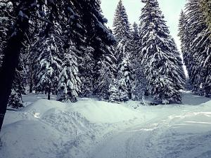 Photo of Snowy Dreams Pamporovo Apartments