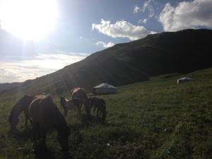 Dream Adventure Mongolia