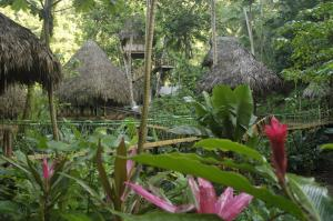 Photo of Dominican Tree House Village
