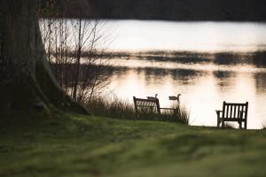 Champneys Forest Mere (5 of 25)