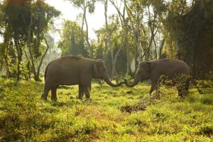 Photo of Anantara Golden Triangle Elephant Camp & Resort