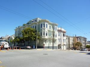 Amsi Cow Hollow (Amsi Sf.Chpe2901)