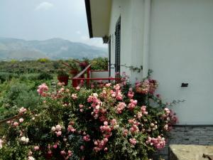 Etna Oasi Guest houses