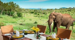 Photo of Royal Madikwe Luxury Safari Lodge