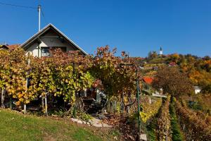 Photo of Vineyard Cottage Vercek