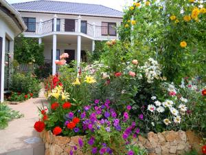 Guest House Fiolent Life