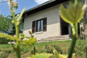 Photo of Vineyard Cottage Vrbek