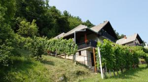 Vineyard Cottage Zajc