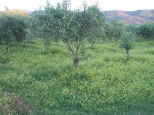 Uliveto Garden, Bed & Breakfast  Bagnara Calabra - big - 56