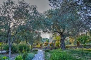 Olive Farm Of Datca Guesthouse - 14 of 26