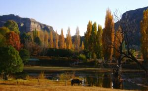 Eddies Self Catering or B&B, Penziony  Clarens - big - 7
