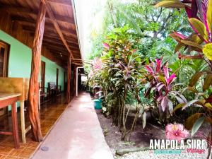 Photo of Amapola Surf Village