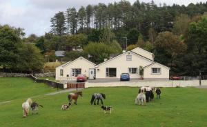 Photo of Muckross Riding Stables