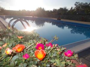 Uliveto Garden, Bed & Breakfast  Bagnara Calabra - big - 45