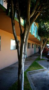 Motel Presidente, Hotels  Ensenada - big - 7