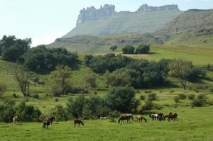 Lake Naverone Holiday Cottages, Rezorty  Drakensberg Garden - big - 88