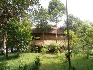 Photo of Neptune Adventure   Tatai River Bungalows