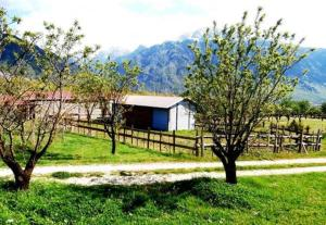 Villa Rustica, Apartments  Konitsa - big - 51