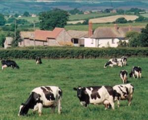 Rydon Farm in Woodbury, Devon, England