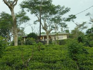 Photo of Wille Group Plantation Bungalow