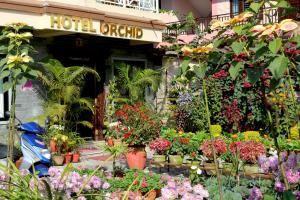 Photo of Hotel Orchid