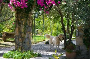 Olive Farm Of Datca Guesthouse - 3 of 26