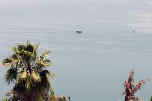 Photo of Spring In Tiberias