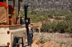 Saruni Samburu Lodge (7 of 84)