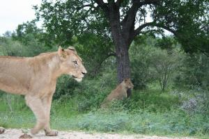 Special Offer - 2 Night Safari Package