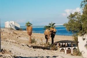 Photo of Rose Dead Sea Rooms