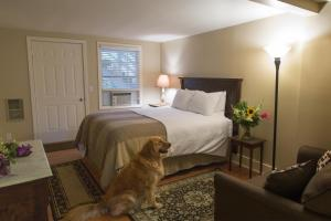 Queen Studio - Pet-Friendly