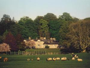 Photo of Ross House Equestrian Holidays