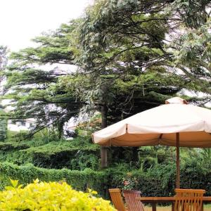 Gigiri Homestead, Pensionen  Nairobi - big - 12