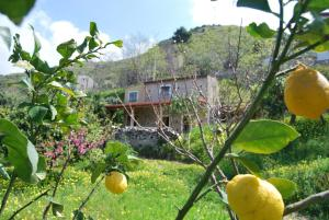 Al Melograno B&B, Bed & Breakfast  Belmonte Calabro - big - 2