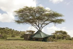 Photo of Green Camp Serengeti