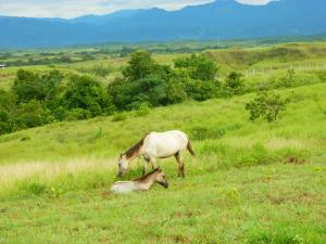 Photo of Finca Los Caballos