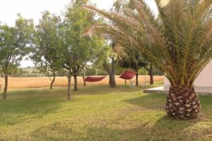 Agriturismo da Remo, Farm stays  Magliano in Toscana - big - 24
