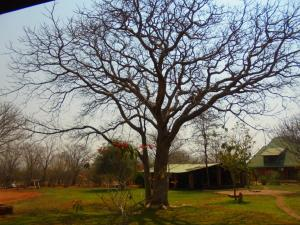 Prana Tented Camp, Zelt-Lodges  Livingstone - big - 18