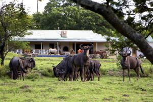 Santa Paloma Guest Farm, Hostely  East London - big - 1